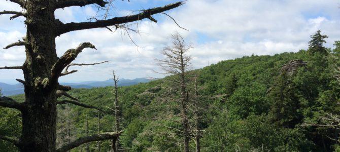 Paleo Camping Tips, Part 2